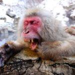 La leyenda del mono careto - Mitología andaluza - Escuela de español